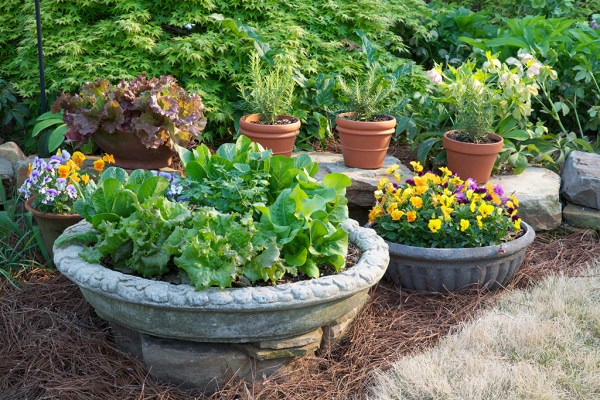 five tips container gardening