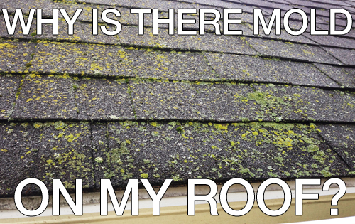 Why is there mold on my roof  Schroer  Sons  Sidney