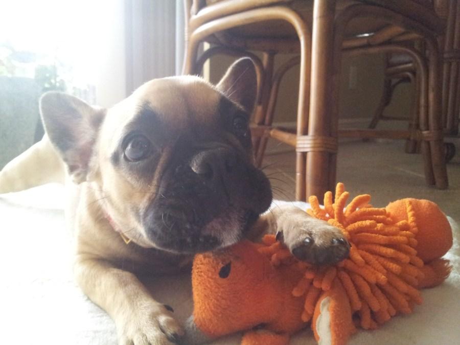 Tampa Puppy Sitter