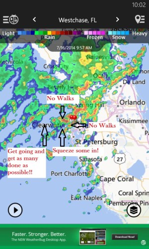 Tampa Pet Sitter Lightning Storms