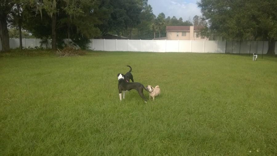 Private Dog Park Tampa