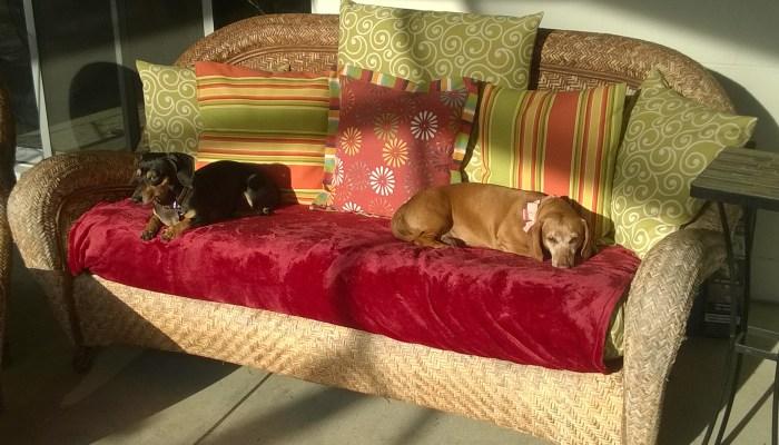 Dog Daycare Westchase