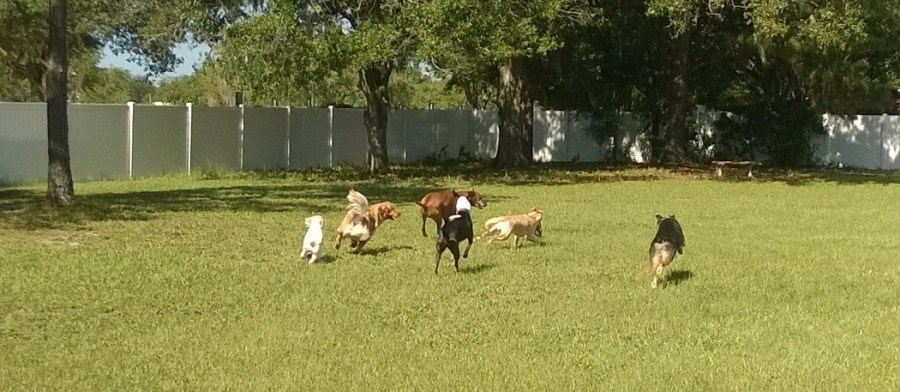 Tampa Dog Day Care