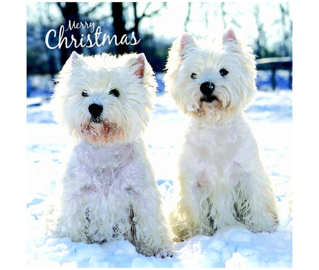 Westie Charity Christmas Cards Pack Of