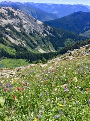 Wildflowers over the Marten Creek Canyon