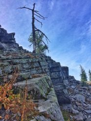 Tree on the edge of the ridge