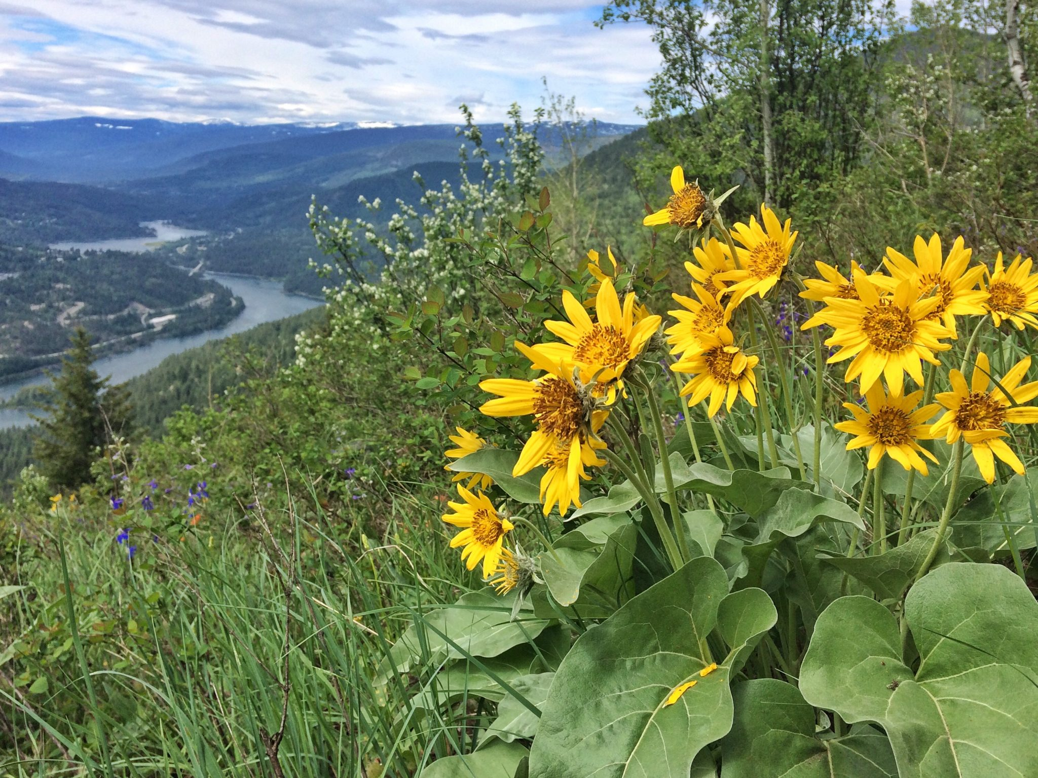 Wildflowers on the Flagpole Trail