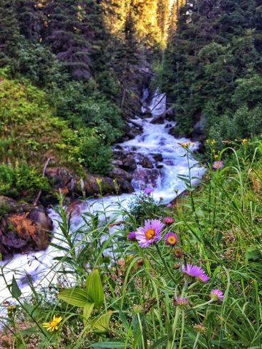 Birnam Creek running along the trail