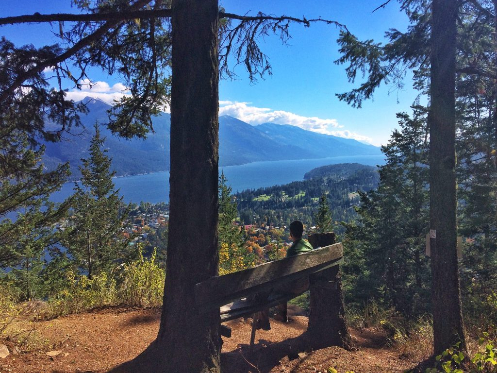 Scenic bench on the Viewpoint trail