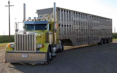 livestockgallery4