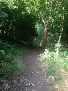 Post Hill woodland path