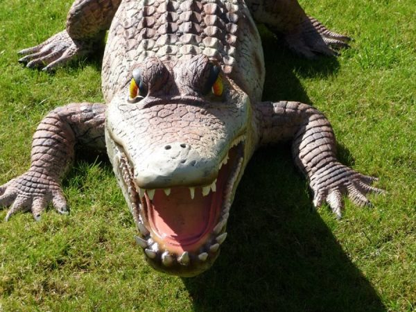 newlay stolen crocodile