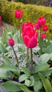 kirkstall in bloom spring 3