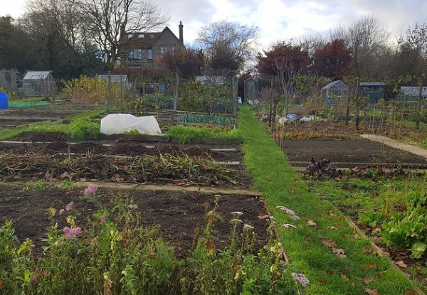 Winter calverley allotment