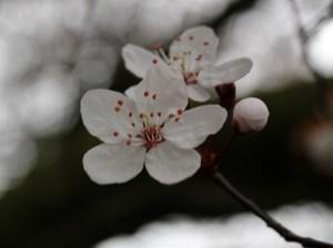 bramley park flowers 3