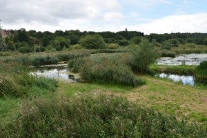 rodley nature reserve