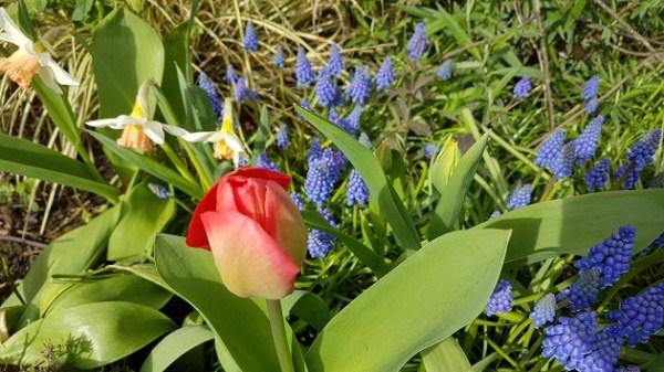 kirkstall in bloom spring 1