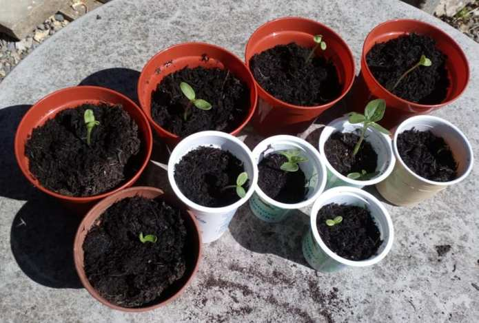 Gardening glee in lockdown – thanks to West Leeds competitions