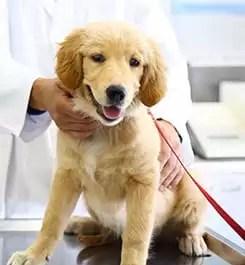 Pet Wellness in Alhambra  West Main Animal Hospital