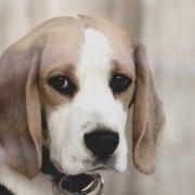 Divorce and Pets – What about Bentley? | Johnsen Wikander P.C. West Michigan Divorce Attorneys