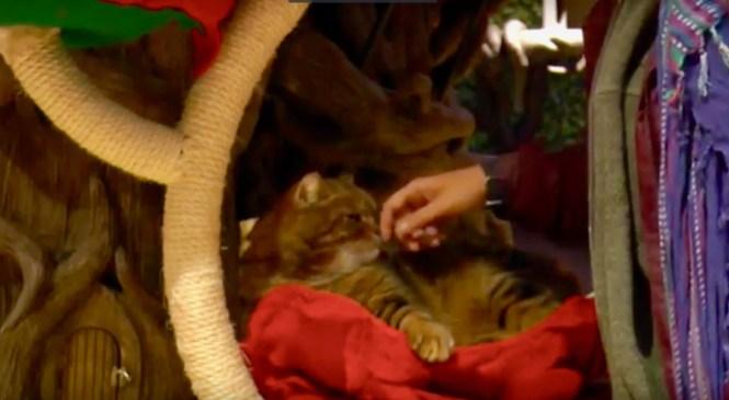 UK's First Cat Café Combatting Winter Stress