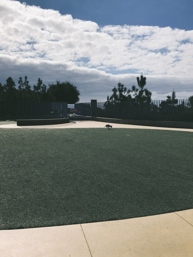 Newport Beach Dog Park at Fashion Island