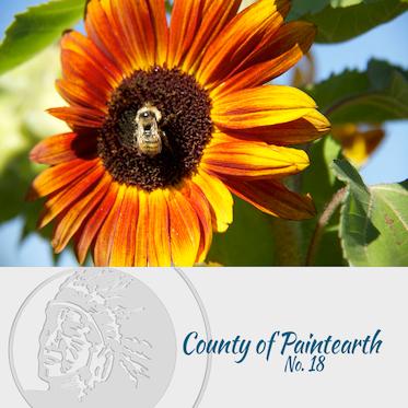 County of Painteart Website