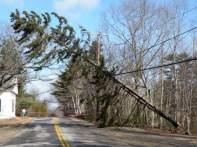 tree on power lines