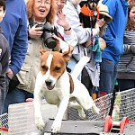 Calling All Canines, Pups and Mutts for the Westport Dog Festival