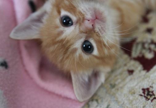 kitten room g