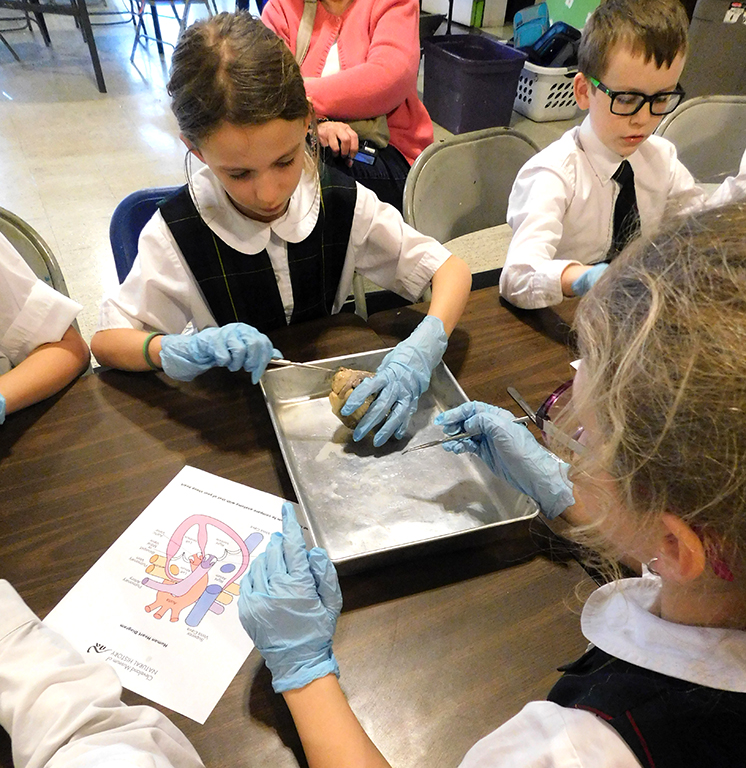 Sheep Heart Disection with 3rd & 5th Graders