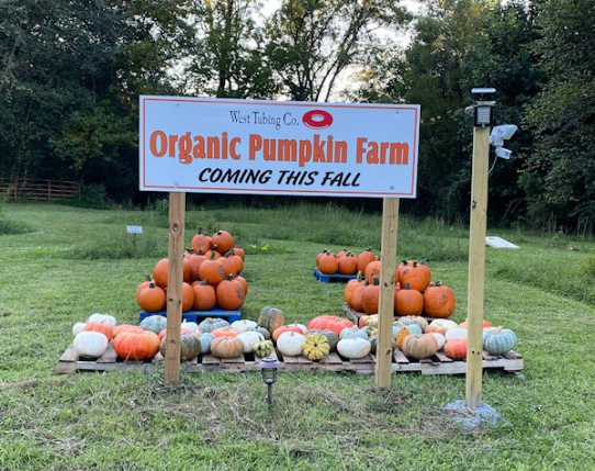 Pumpkins for Sale - The Corn Maze at West Tubing Company - Warne, NC