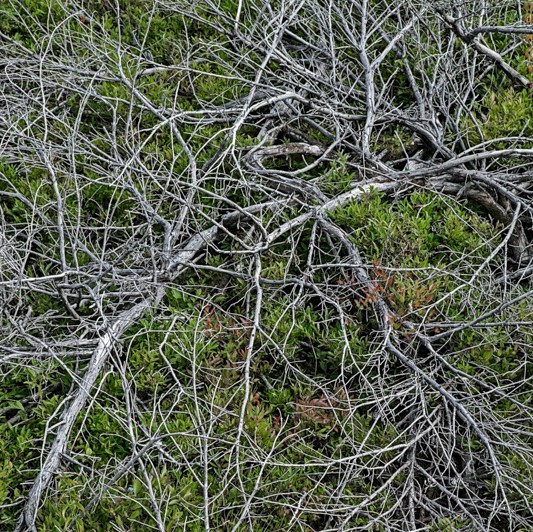 #35   Branches