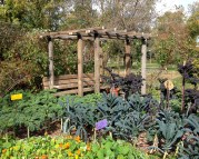 The café's vegetable garden - is there such a thing as too much kale?