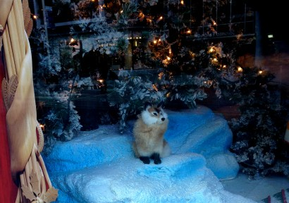 Sweet fox in Hudson's Bay Christmas window