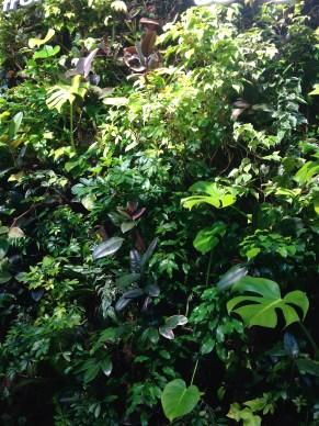 The York Street Longo's green wall.