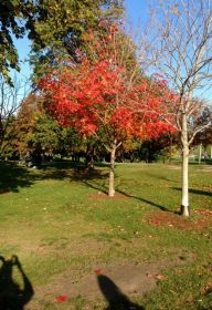 A flash of bright red in Christie Pits.