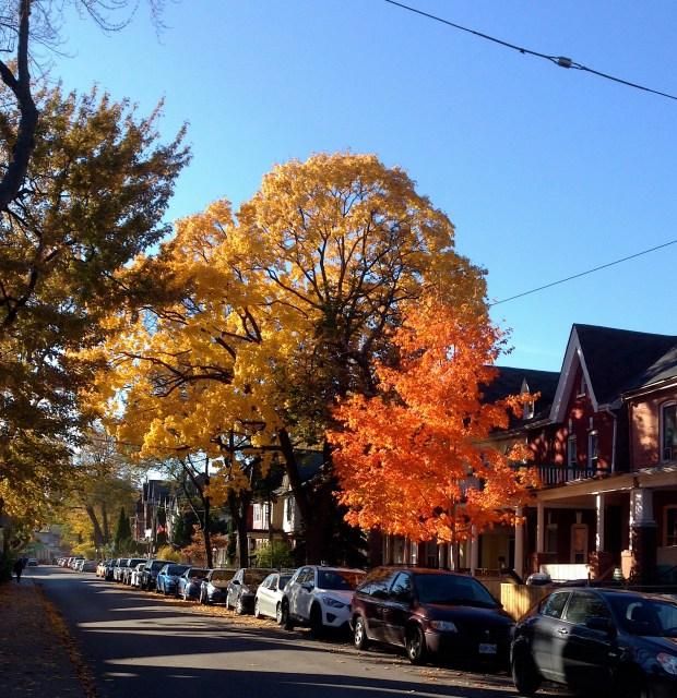 Trees on Baldwin Street.