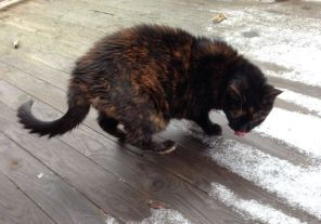This is my lovely old friend, Zagers, checking out the snow on her deck today.