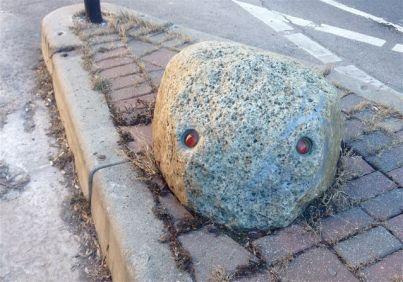 Street-rock-critter, on Wellington.