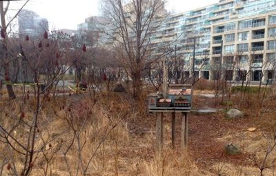In the little Queen's Quay marshland, the city's sweetest birdhouse