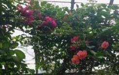 Allan Gardens - glorious colour