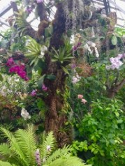 Allan Gardens - old tree, covered in orchids, succulents and airplants