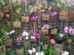 Allan Gardens - little orchid room (hard to avoid the reflections)