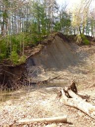 erosion on side of ravine in Wilket Creek Park