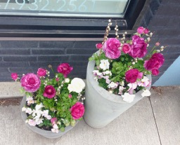 bright and lovely ranunculus pots outside a Junction shop