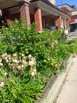 On the walk north, a great garden on Ossington