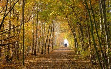Cyclists cycling through autumn trees