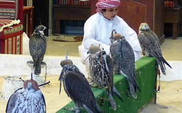 Boy at the falcon bazar in Doha