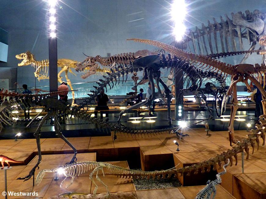 20170629 Katsuyama Dinosaurier Museum P1430813
